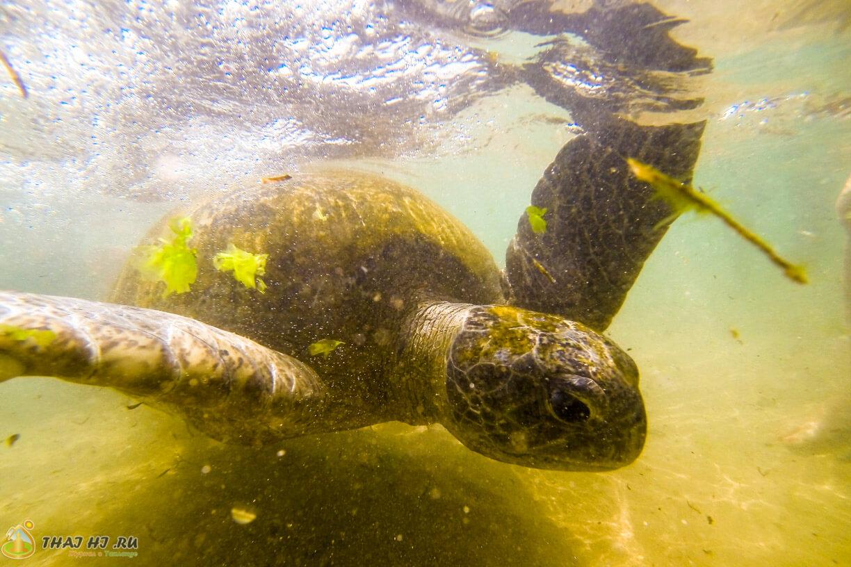 Хиккадува - черепахи
