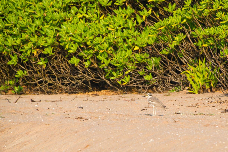Птицы на Шри-Ланке